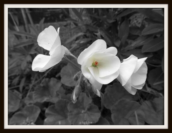 whiter than white by kazza12