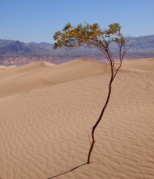 Mesquite dunes, California by maggietear