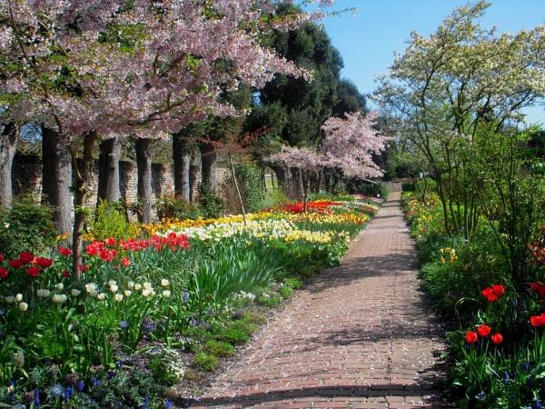 Spring by Darwi