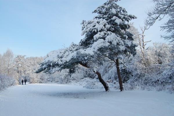 Snow scene by ianball