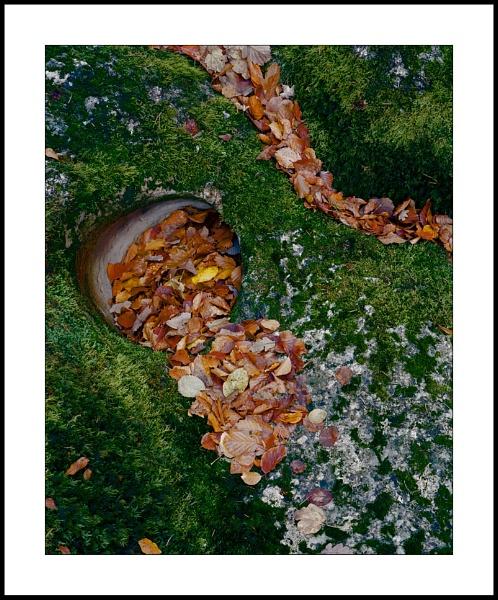 Leaf flow by joolsb