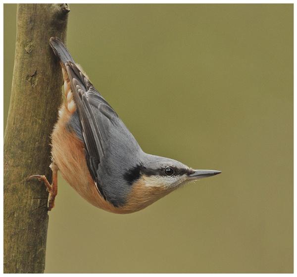 Bird on a Stick ! by KBan