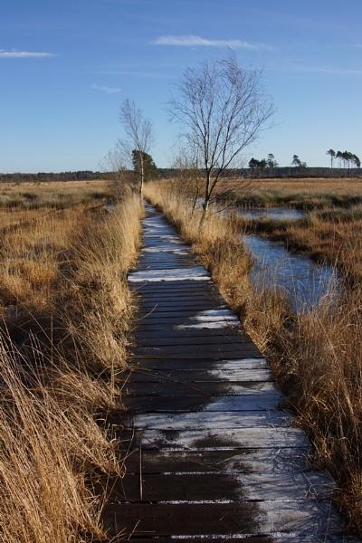 The boardwalk, Thursley by jinstone