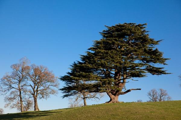 The lone tree by JeffreyW