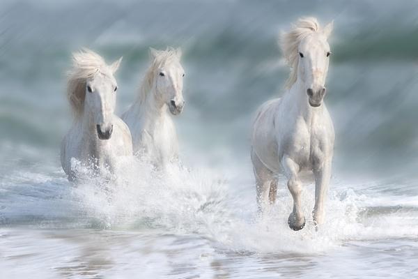 Sea Spirits by CathR