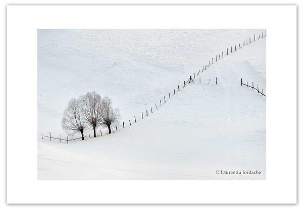 harmony of fences by jordachelr
