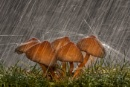 Fungi In the rain
