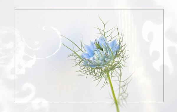 Fine Flower by dabhandphotographics