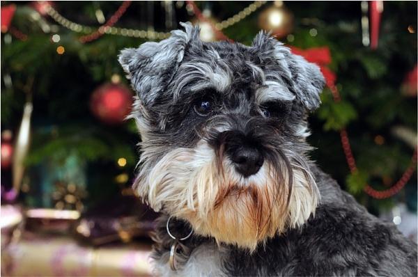Waiting for Santa- by gmorley