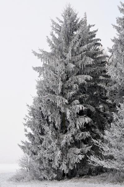 Christmas tree by orygenes