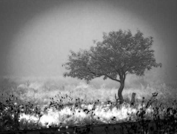 alone on a misty meadow by blomman