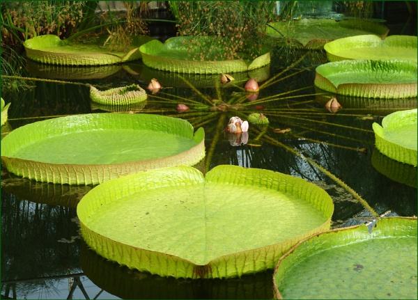 Water Garden in France by JuBarney