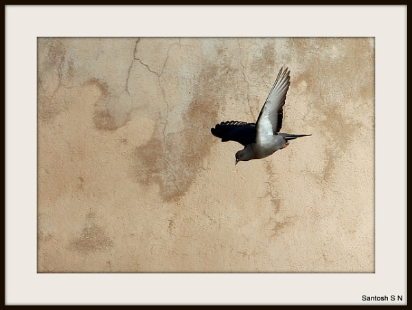 a bird in flight by santosh275