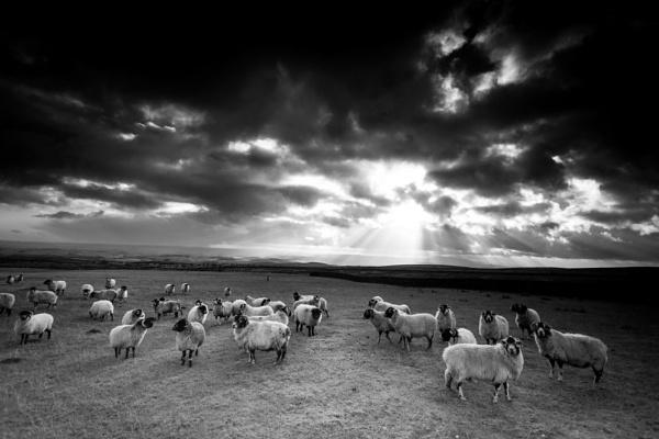 Dark Sheep by ade_mcfade