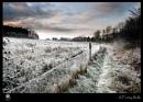 A Frosty Walk