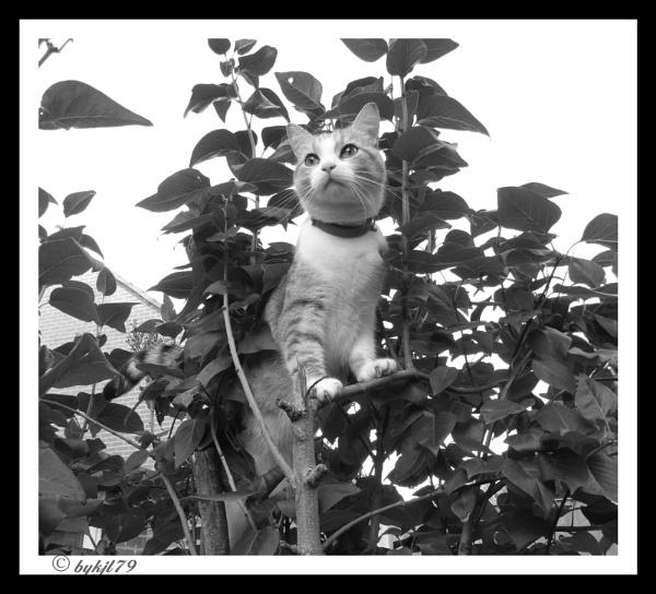 am watching you by kazza12