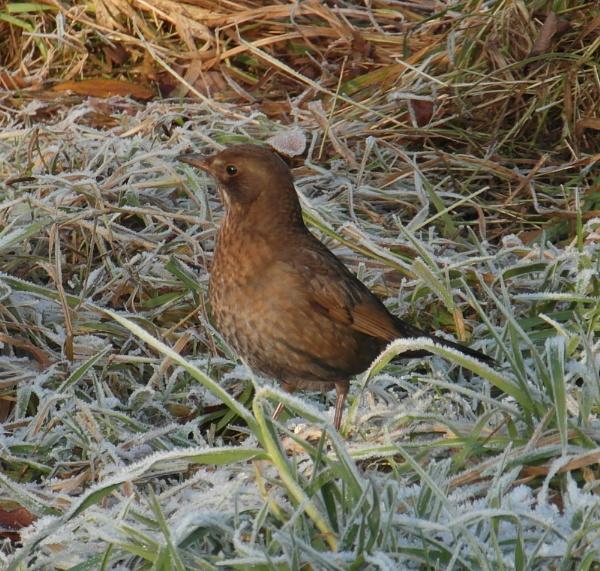 on frosty ground by kazza12