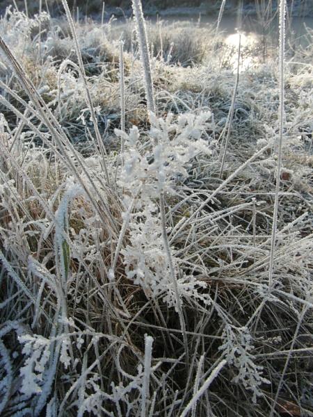 frosty white by kazza12