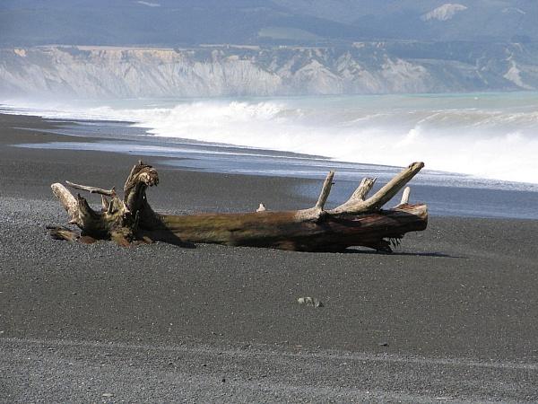 The log Lake Ferry  Wellington New Zealand by photopix12