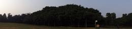 The Great Banyan Tree, Indian Botanical Garden