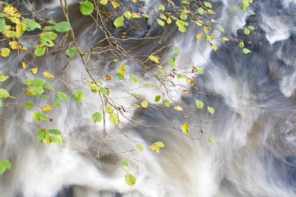 Leaves by jon gopsill
