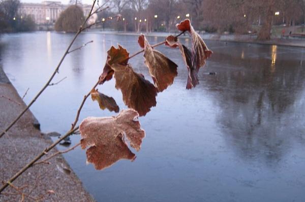 Last Leaves by RysiekJan