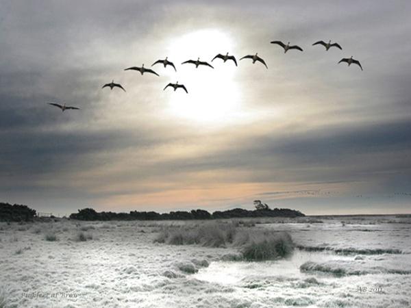 Morning Flight by aliciabeesley