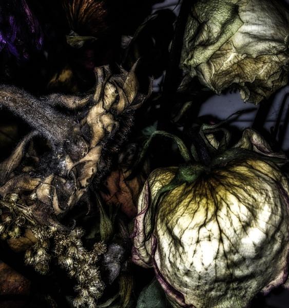 Darkly by AnnCourtney