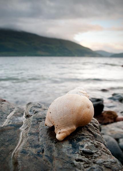 Sea Shell by GeorgeBuchan