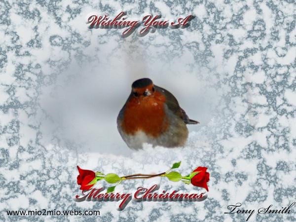 christmas robin by mio2mio