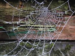 Cobweb Corner