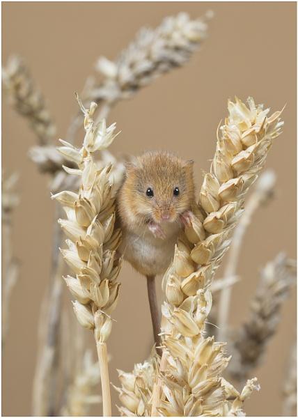 Harvest Crop by Lillian