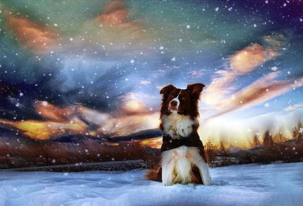 Katie\'s Winter Wonderland by paulcookphotography