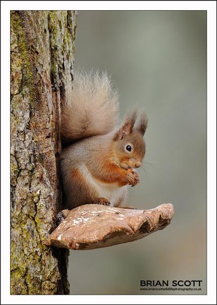 Squirrel Fungus by Brian_Scott