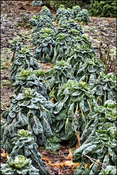frozen veg by luckybry