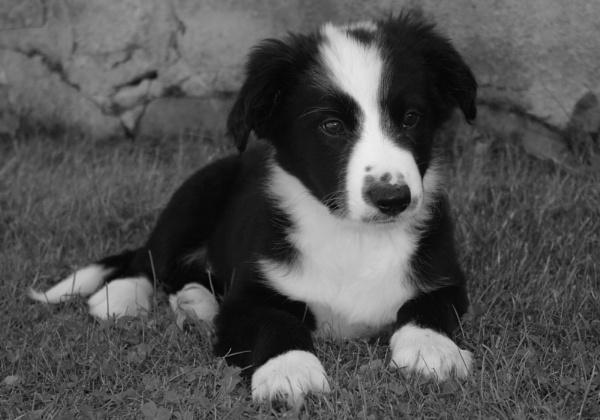 Puppy Love by GX20PAB