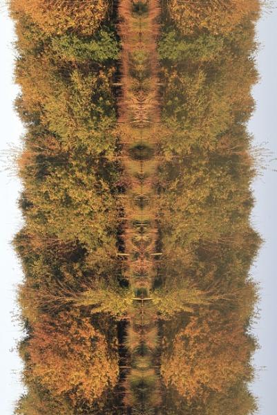Autumn on its side! by Glen-W