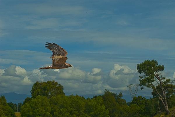 Hawk 1201 by paulknight