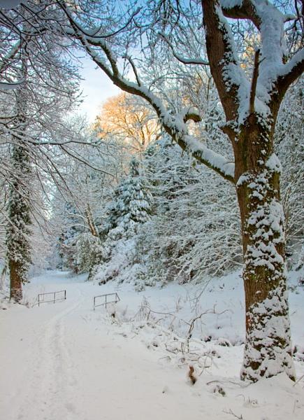 Walking in a Winter Wonderland by canonfan