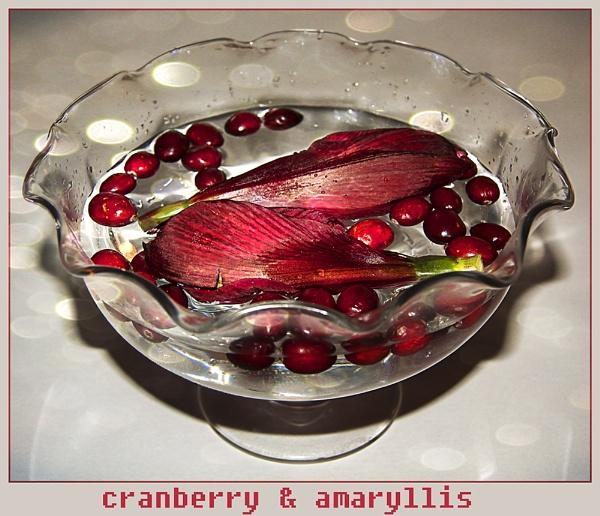 Cranberry & Amaryllis by Irishkate