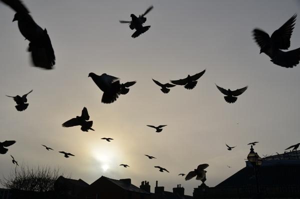 Killer pigeons by Bryan_Marshall