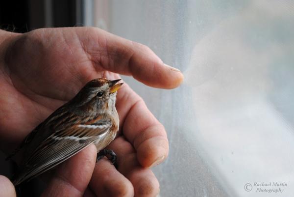 Little Bird by VisualPoems