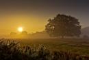 Wortham Ling Sunrise