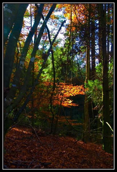 Shaft of light by foto_foley