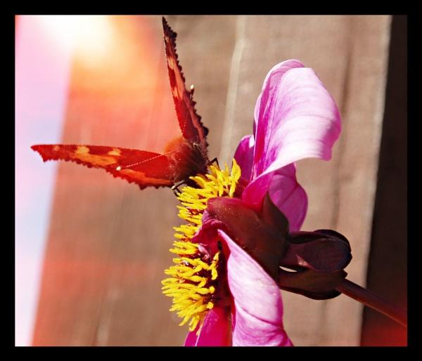 Butterfly. by megan99