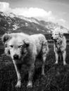 Shepherds by PasseArt