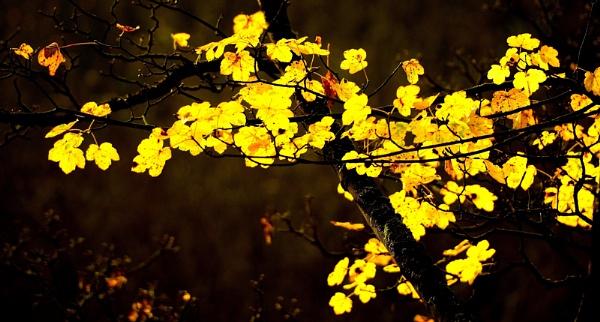 Autumns Light by MomentsInTime