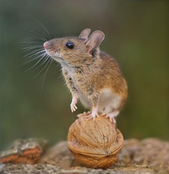 That Mouse Again by clintnewsham