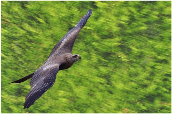Kite Flight by MikeRC