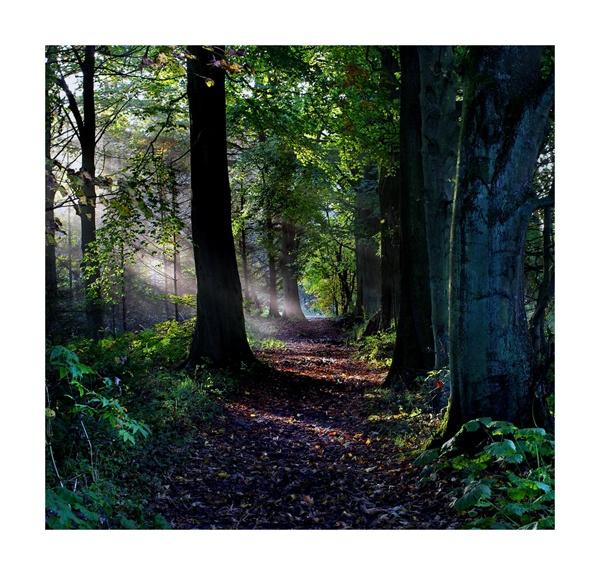 Woodland Walk by WillieH